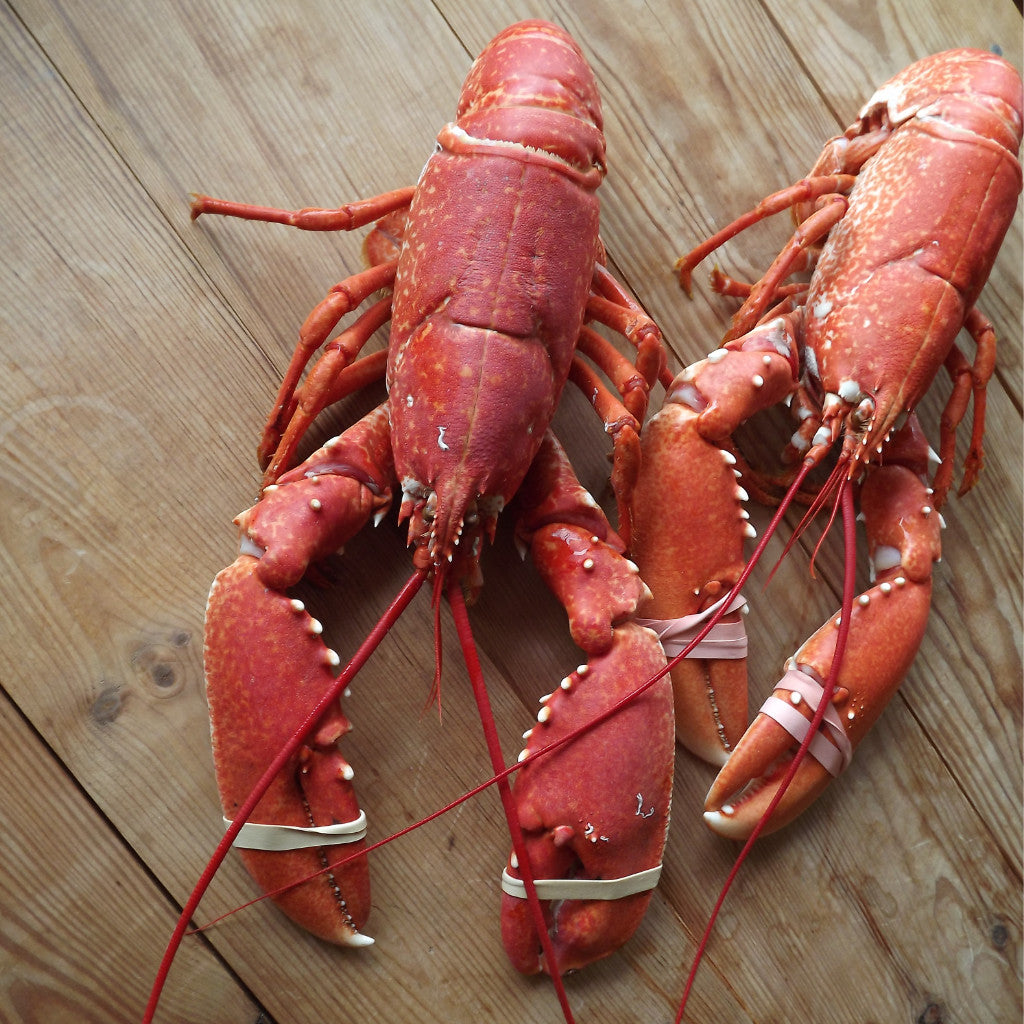 Cooked Native Lobster