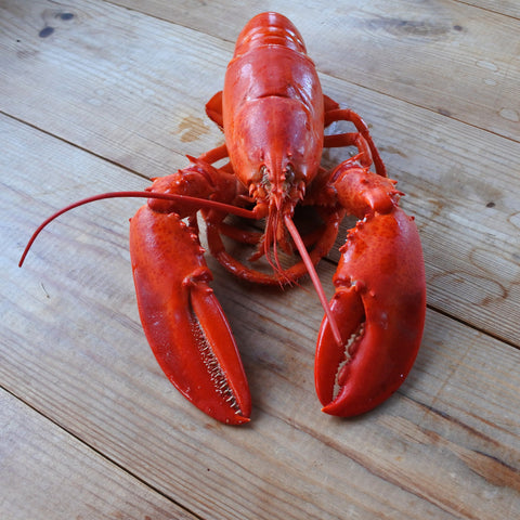 Medium Canadian Lobster - Cooked