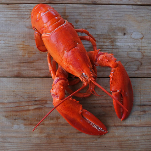 Large Canadian Lobster - Cooked