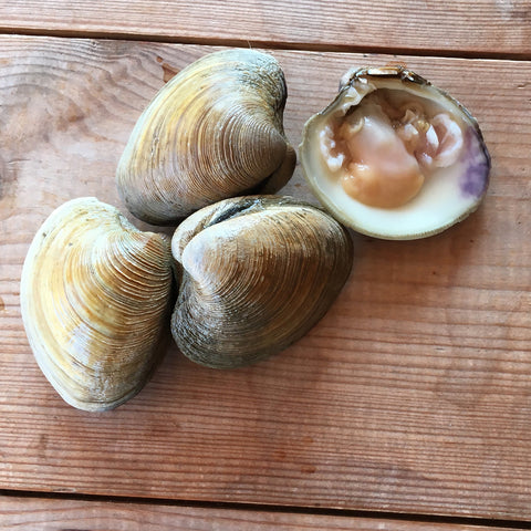 Hard Shell Clams