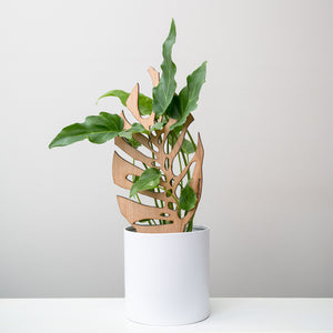 Monstrella - Plant trellis inspired by the Monstera Leaf