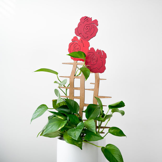 Dianthus -Bouquet of Carnations 1
