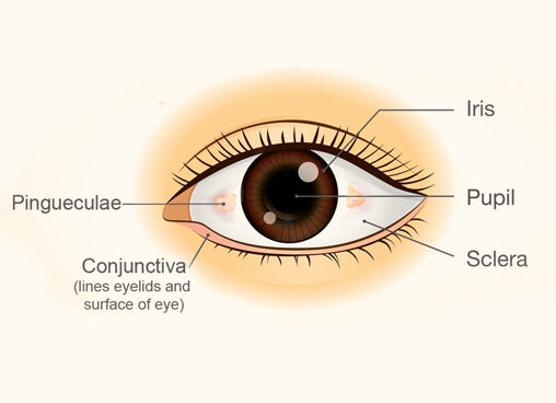 Diagram of an eye and its parts