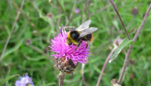 Pollinating insects are vital to our very existence