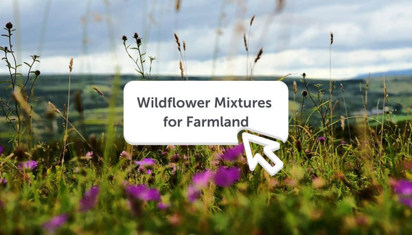 Wildflower Seed Mixtures for Farmland and Field Margins