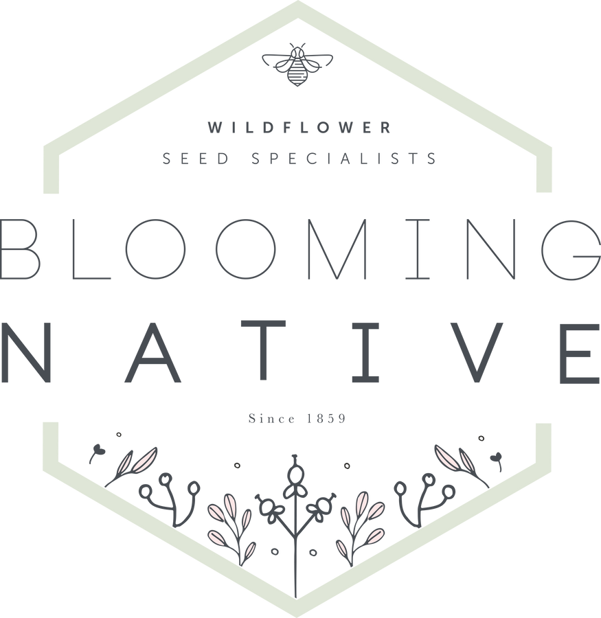 Blooming Native