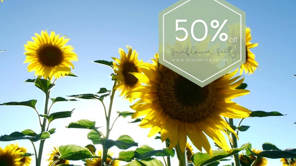 Sunflower Seed special offer