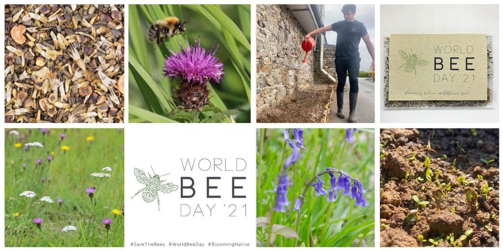 World Bee Day Competition