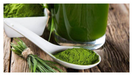 green tea extract reduced DHT levels in the blood streams