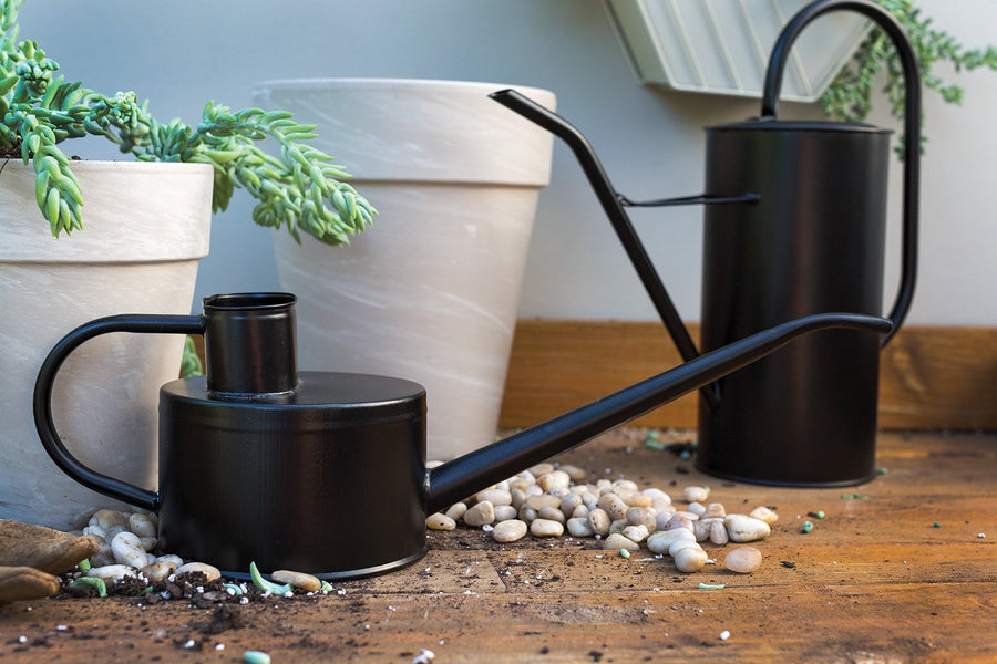 Black Steel Watering Can - Short - Plant Society - Toronto