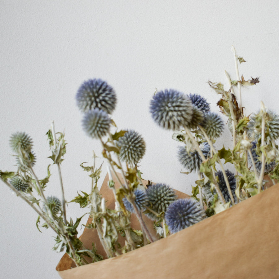 Dried Globe Thistle