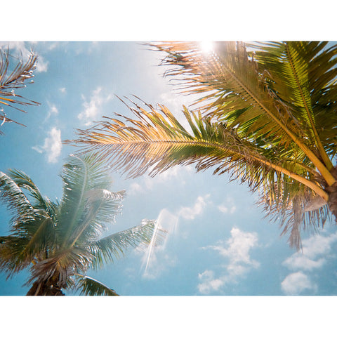 Beach with palms and sky