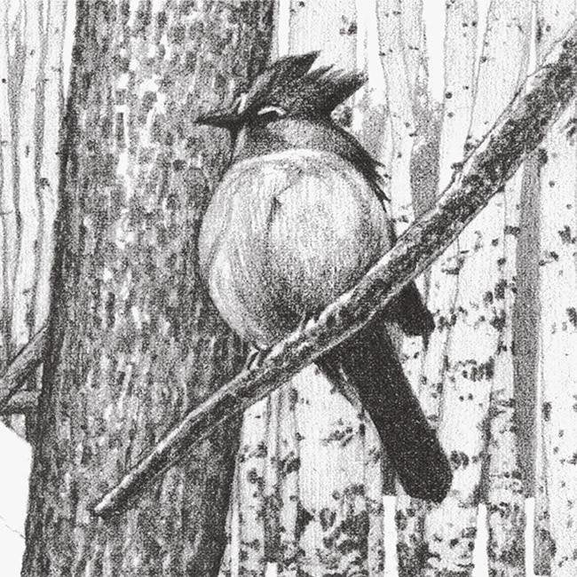 Art Pencil Drawings Nature Wall Decor Personalized Art Personal Prints