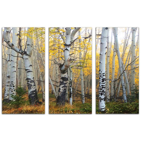 Aspen tree art that uses three panels to create a forest scene - Personal-Prints