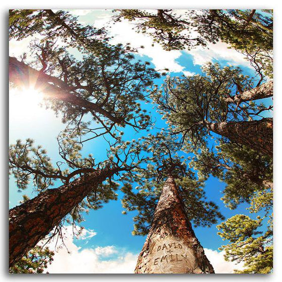 Personalized nature wall decor looking up to the sky through pine trees - Personal-Prints