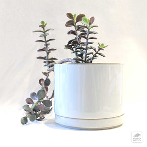 Hasami Porcelain Planters - two sizes