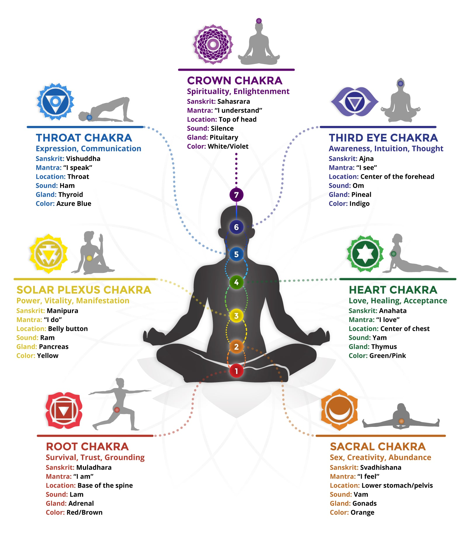 The Ultimate Guide to Chakras: Colors, Symbols, Glands, & Their Meanings!