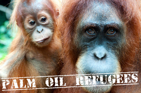 Wildlife, The Palm Oil Crises