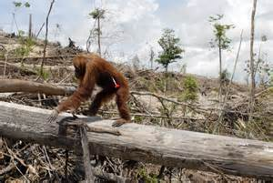 Animal, The Palm Oil Story