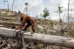 Mammal, Who Cares About Palm Oil Free?