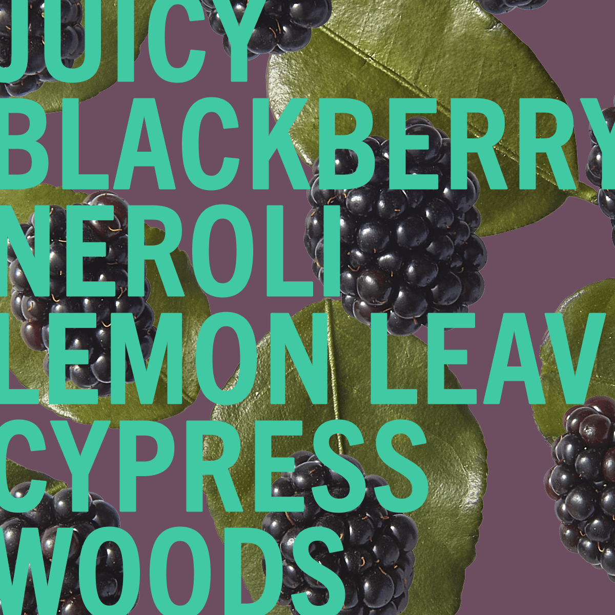 Blackberry Woods Fragrance 100ml | Glossy berry juice with punk-sharp citrus. | Clean All Gender Fragrance | Shay & Blue