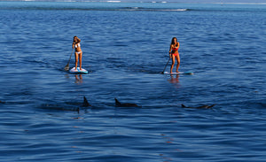 Stand Up Paddle (SUP) - 321Kiteboarding & Watersports