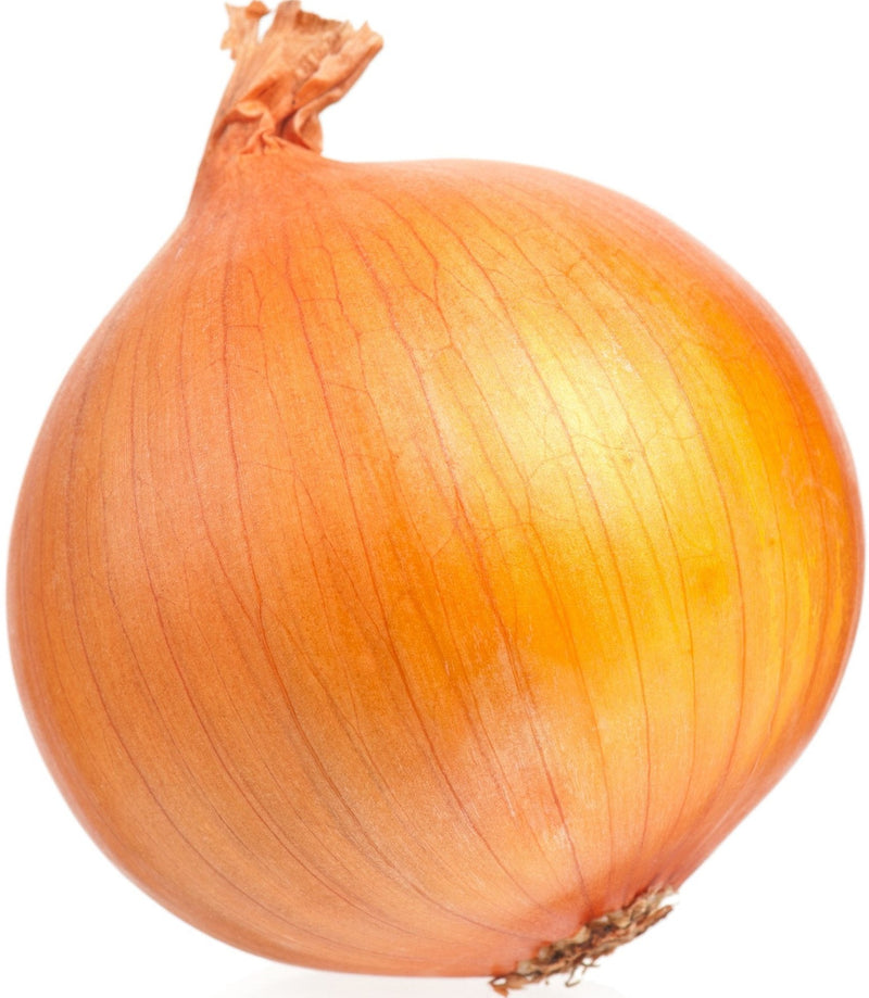 Fresh - Onion - Cooking