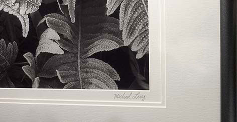 Always take special care when framing charcoal drawings