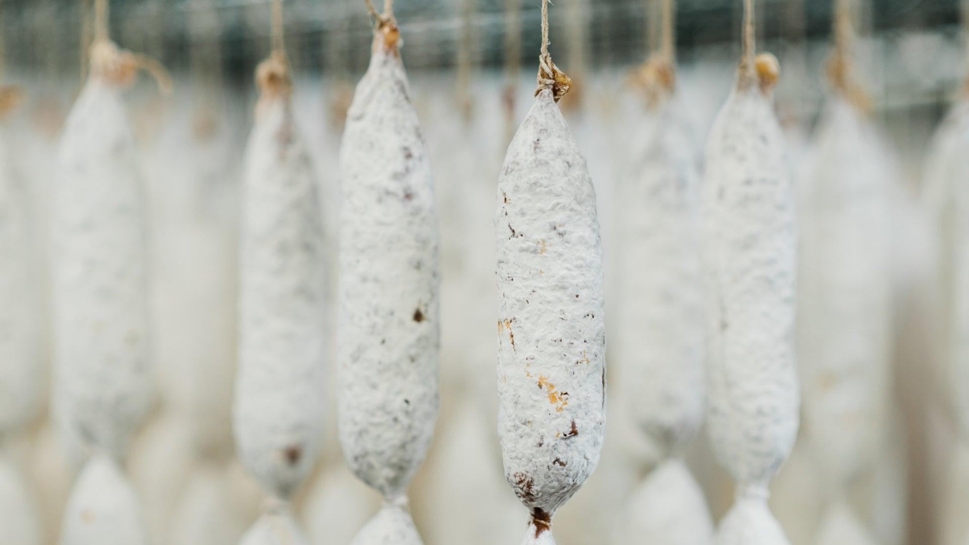 A close up picture of salami hanging in the drying room to show the salami's protective white mold.