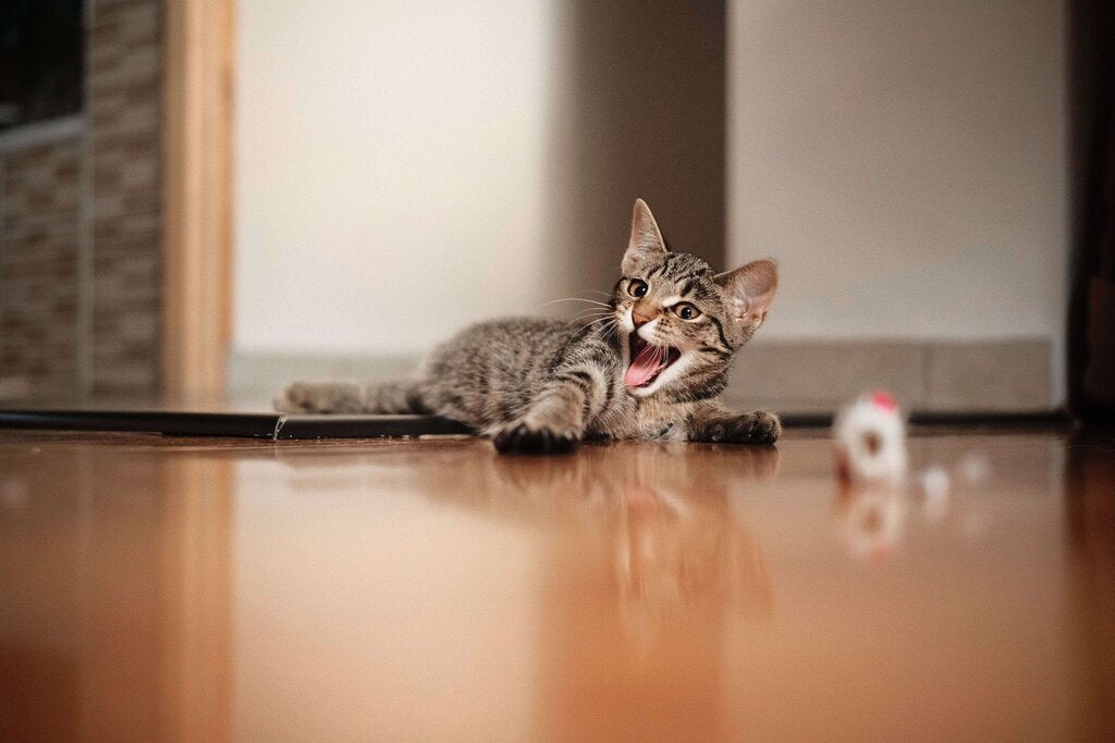 A Cat makes noise due to a disorder of circadian rhythm