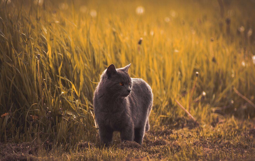 Cat's circadian rhythm has been changed because of the invention of artificial lighting