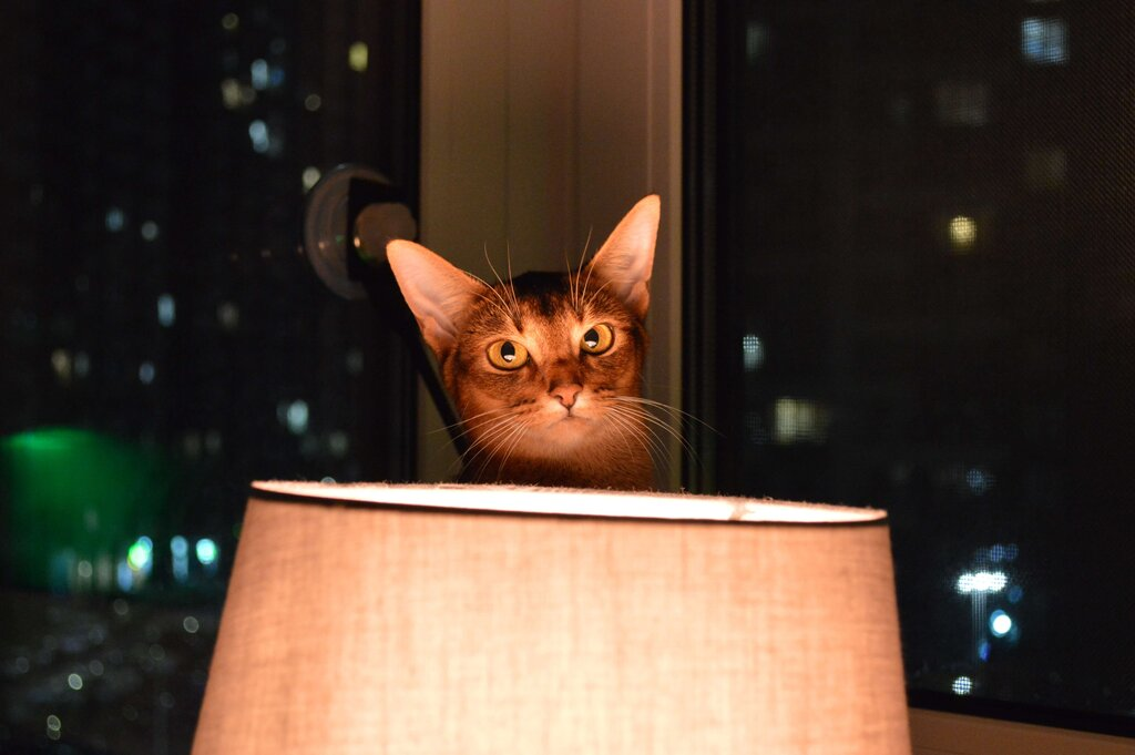 Your cat might find pulling down lamps as interesting as capturing chess just like you, so watch out