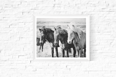 3 Horses Pose Photograph Printable Black and White