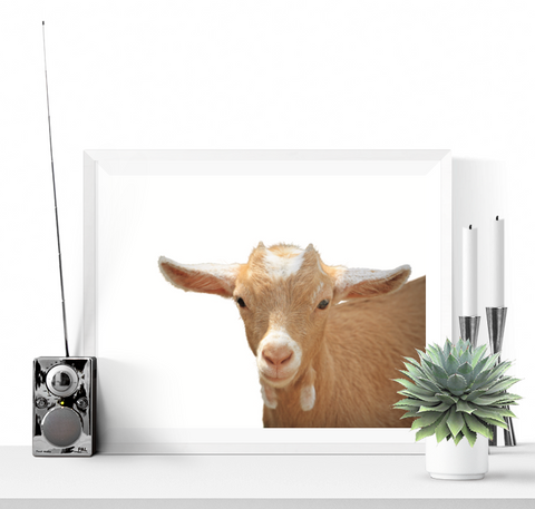 Baby Goat Photographic Printable