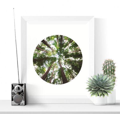 In The Forest Photograph Printable