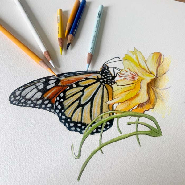 monarch butterfly pencil drawing