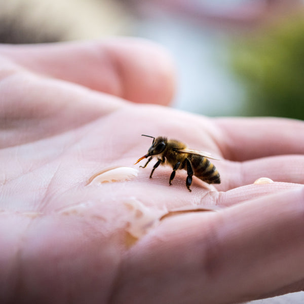 bee on hand with honey