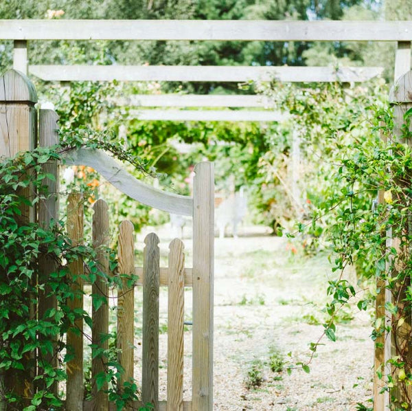 white garden gate with vines growing