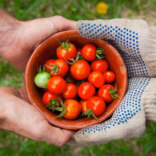 hands holding a bowl of cherry tomatoes