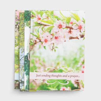 Image of Get Well - Spring Time - 12 Boxed Cards other