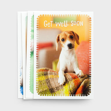 Image of Whiskers & Paws - Get Well - Surrounded in Prayer - 12 Boxed Cards other