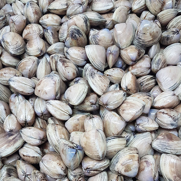 Live Diamond Shell Clams