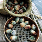 Live Cockles