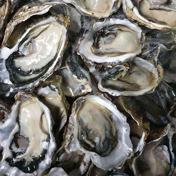 Fresh Half Shell Pacific Oysters