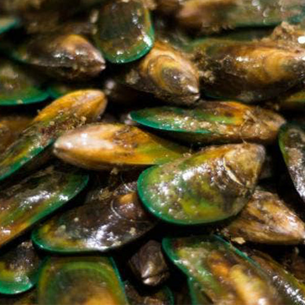 Fresh Live Green Lipped Mussels - Family Sharing Bucket - 25kg