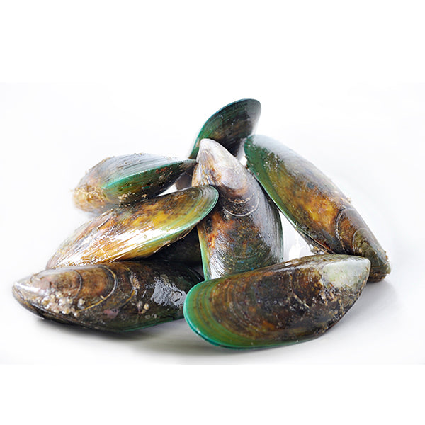Fresh Live Green Lipped Mussels