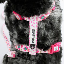 Load image into Gallery viewer, StarBARKS & Sprinkles Dog Harness