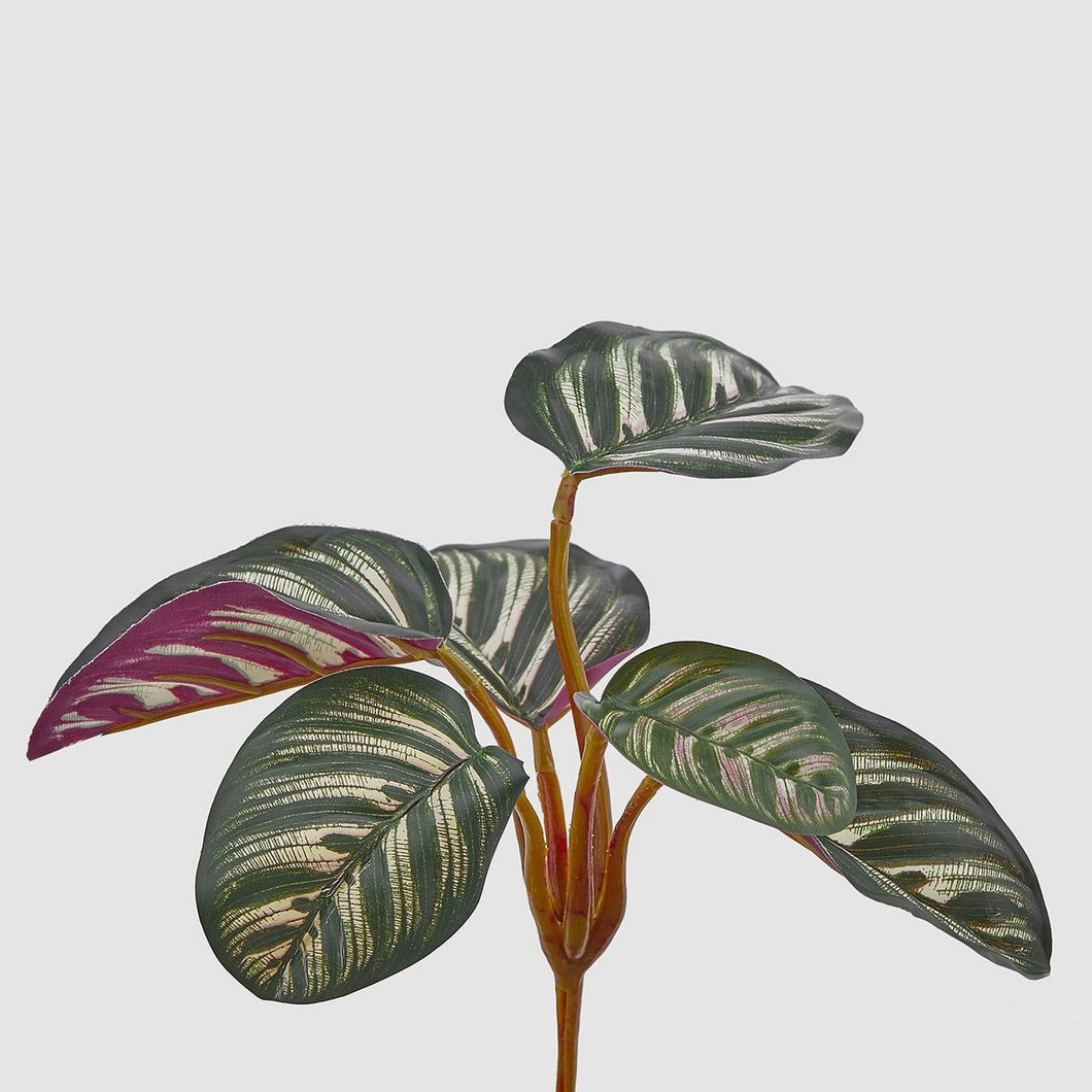 Calathea Artificial para exterior (anti UV)