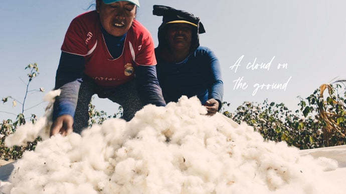 Why Peruvian Pima cotton is worth it