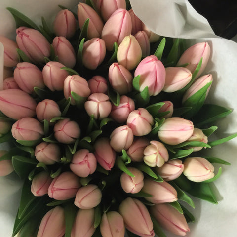 Tulip Pale Pink Bunch of 10
